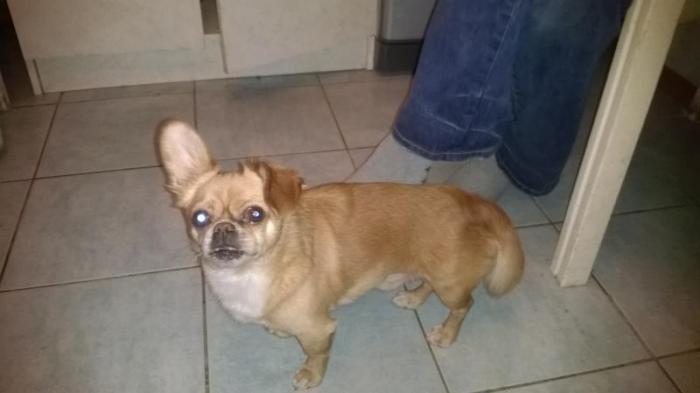 2015-02-10 потерялась собака-мальчик (ТУЗИК) с ошейником черного цвета (тел 868276038)